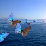 Sommerfugle over sø